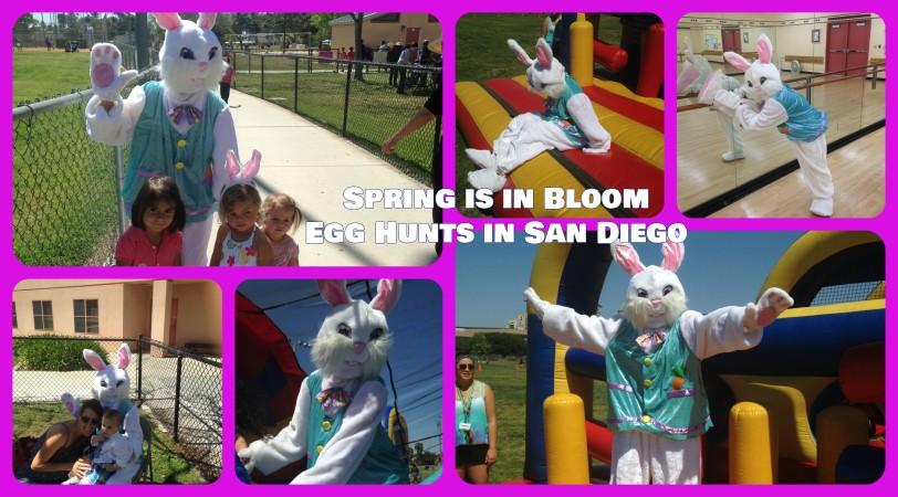 egg hunt san diego cover image